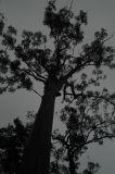 Tree with dark cloud (Jaime Malo)