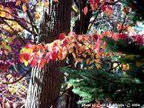 Autumn Snapshot.