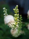 White Flower Portrait Shot  DSC-R1