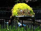 Frog Shrub DSC01538 H-5.jpg
