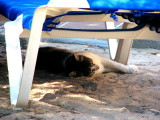 Cool Cat - Formentera 2008