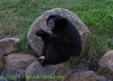 dubbo.c.monkey.0588.jpg