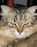 Anni P's Kitty:  Poco