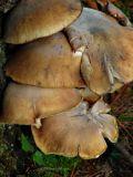 Mushroom Prototype