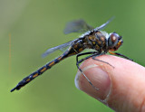 Dragon Fly Drying Out