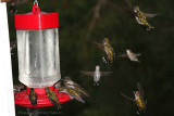 Hummers and More Hummers