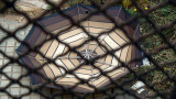 cobweb with antenna