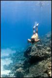 Snorkler