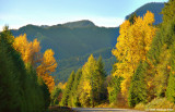 Fall Colors along the McKenzie Highway