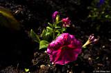 Flower in harsh light
