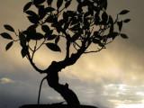 Banyan Tree2.jpg