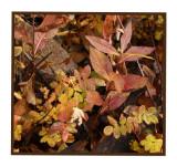 Autumnl Leaves2 copy.jpg