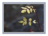 Fall leaves3.jpg