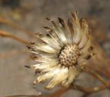 Woodland Flower3
