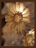 Woodland Flowers