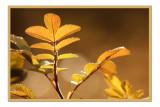 Fall leaves4 copy.jpg