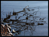 Lake Reflection2.jpg