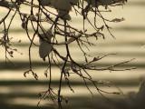 Snow on Lake2.jpg