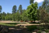 White Mountain Apache Reservation