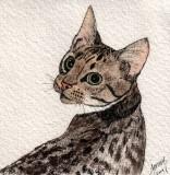 Toby cat, 4 x 4   11-09