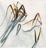 Winter Grasses, 4 x 4   11-09