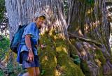 Debra / Alaska yellow cedars