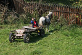 boy driving horse-drawn vehicle