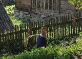 with hay rake