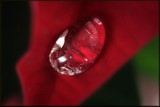 Natural Fresh Water Pearl