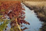 drowned vines...