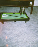 002 Molly on snooker table May 2000