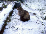 019 Molly surveying the snow4 26 Dec 2001
