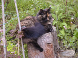 032 Relaxing on a tree stump 2 June 2002