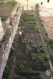 Franciscan garden