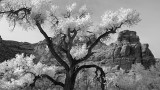 Black and White Utah