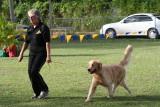 Barbados Kennel Club Dog Show