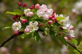 flowers_foliage_nsw