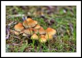 Fungi cluster