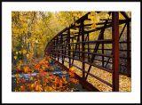 Idaho Fall Color 2006