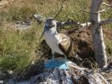 A Grand Galapagos Adventure