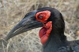 South Africa - Kruger National Park (2005)