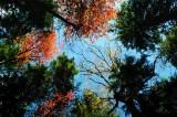Appalachian Fall Colors