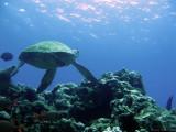 Reef Visitor