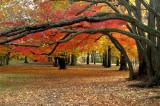 Late fall Wonderland