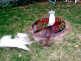 Dog run!