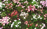 Tralee flower garden