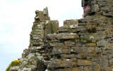 Castle wall garden