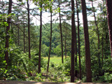 View From Whispering Pine Cabin.jpg