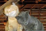 Kitty Closeup.jpg