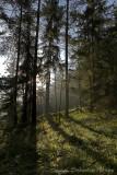 tree vs. light